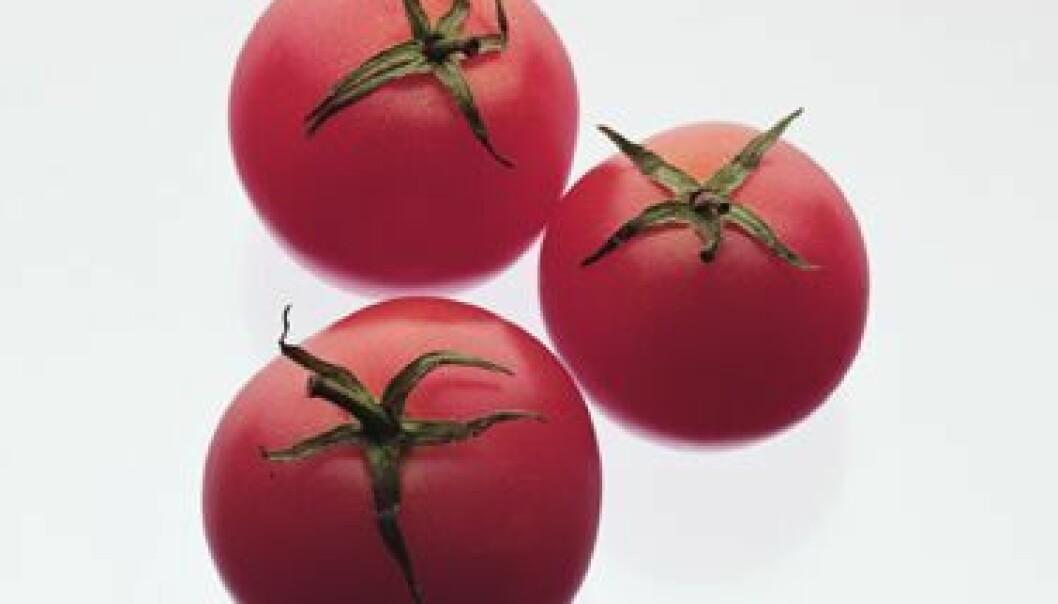 Genmodifiserte planter til stor nytte for fattige bønder