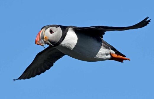 Seabirds ring the alarm on ocean warming
