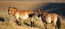 Hvis ikke hestene hadde kommet seg ut av Nord-Amerika, så hadde de trolig ikke eksistert i dag