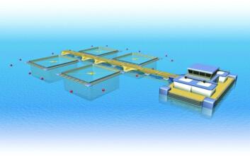 Slik tenker forskerne seg at et framtidig stort integrert oppdrettsanlegg til havs kan se ut. (Illustrasjon: SINTEF)