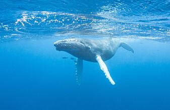 Fisk og kval bind klimagassar i havet