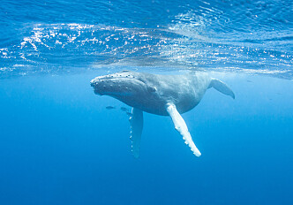 Fish and whales keep greenhouse gases in the ocean
