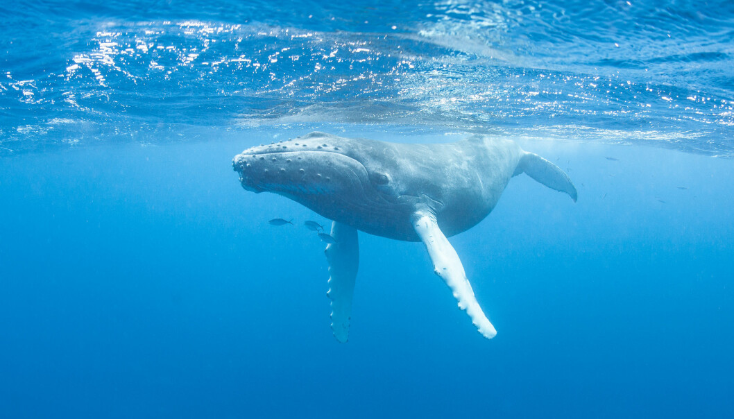 Angela Helen Martin has published a review article on how animals affect greenhouse gas emissions the ocean.
