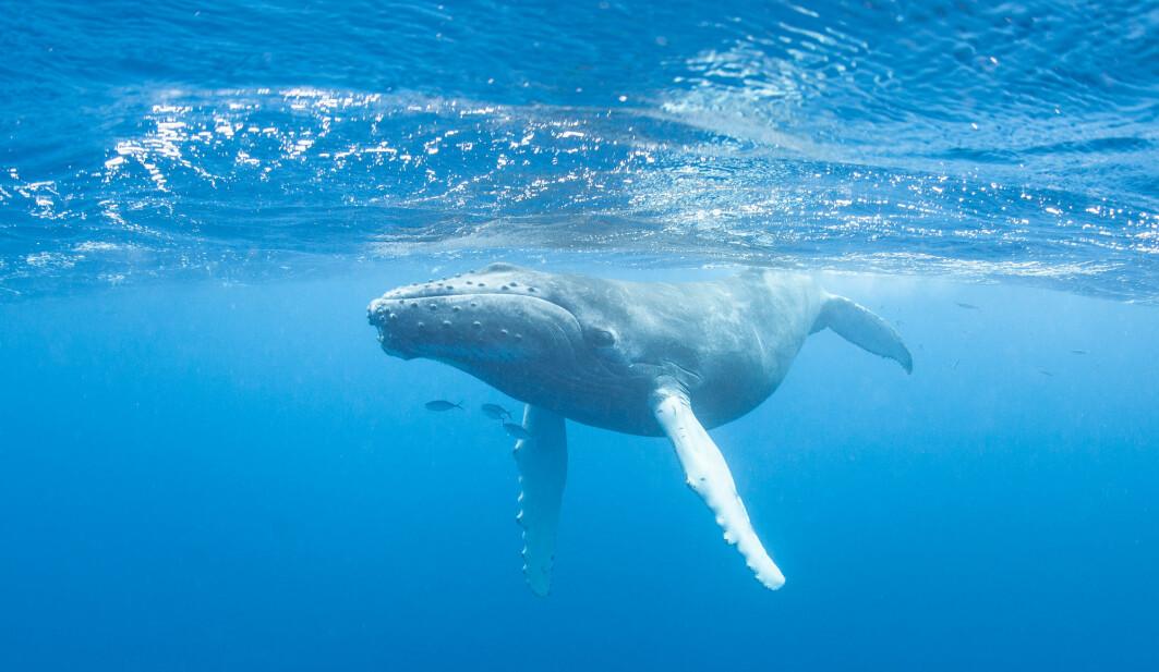 Alt dyreliv i havet er ein del av ein naturleg prosess som absorberer klimagassutslepp.