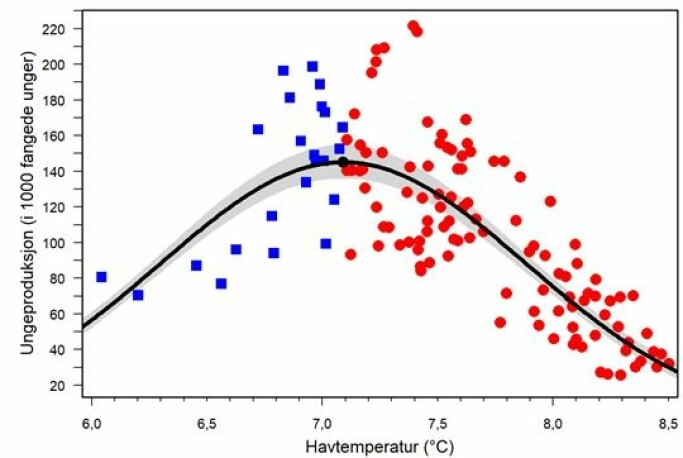 Lundenes ungeproduksjon er høyest ved en havtemperatur på 7,1°C. Både lavere og høyere havtemperatur førte til lavere ungeproduksjon.