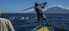 Ser du på hvalen som ressurs eller truet art?