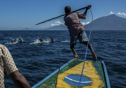 The whale: mascot for the environmental movement and sacred prey