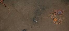Kull kan ta knekken på gammel forurensning på havbunnen. Men hvordan går det med dyrelivet?