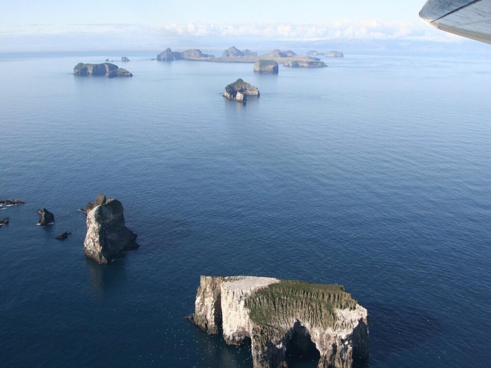 Innbyggerne på Vestmannøyene på Island har drevet med fangst på lunde siden middelalderen.