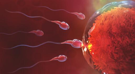 Studie som viser at sædceller svømmer som små korketrekkere, er trukket tilbake