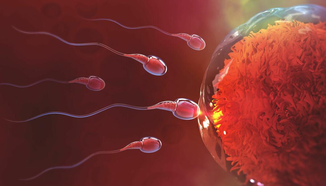 Forskerne bak studien som nå er trukket tilbake, mente at sædcellene beveger seg som korketrekkere.