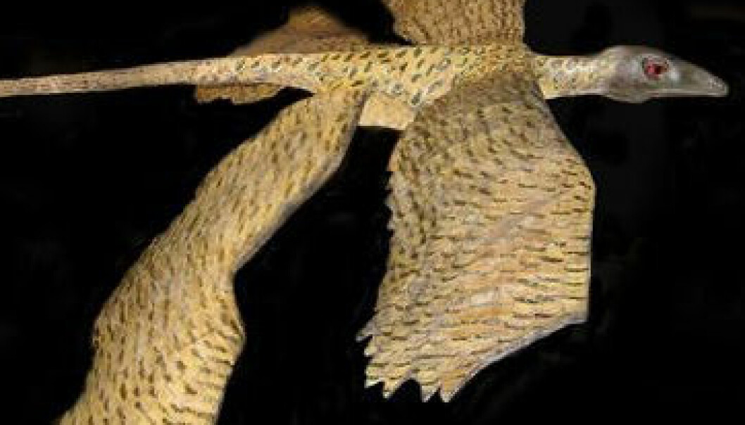 Microraptor flyr igjen