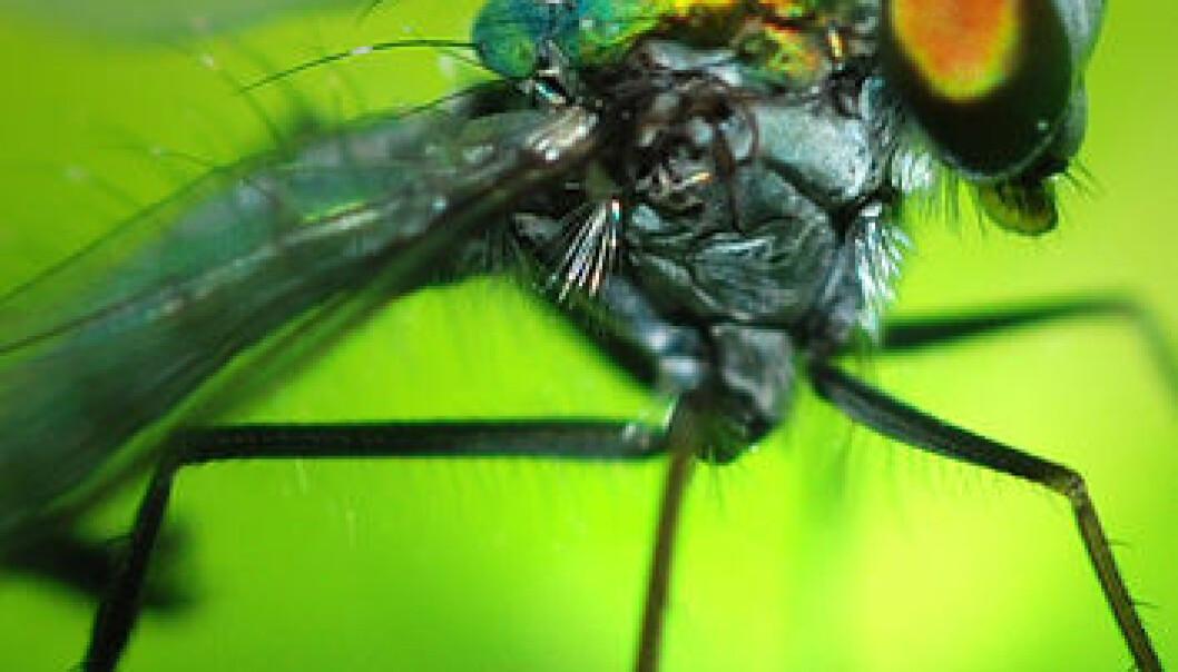 Insekthjerner gir superpiloter