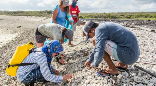 Forskere fant mikroplast på alle strendene på denne Galápagos-øya