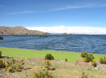 Utgravningene har foregått nær byen Puno ved Tititicacasjøen. (Foto: Wikimedia Commons)