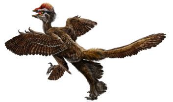 Her er den eldste fjærkledte dinosaur som hittil er kjent for vitenskapen; Anchiornis huxleyi. Dateringer utført av kinesiske forskere i Nature, viser at den levde for 151-161 millioner år siden. Illustrasjon: Zhao Chuang og Xing Lida.