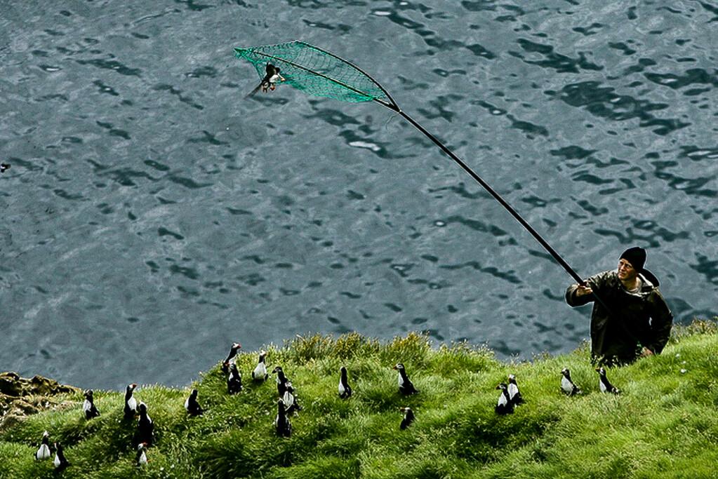 Fangsten av lundefugl foregikk ved at fangstmenn sto i skjul i de bratte fuglefjellene og «håvet inn» lundene som fløy forbi.