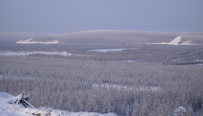 Den russiske taigaen i Nord-Sibir. Dette er kun et illustrasjonsbilde.