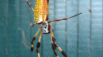 Edderkopper i rommet