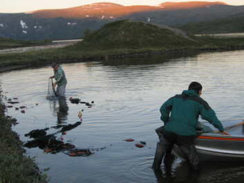 Forskarane set ut nett for å fanga aure i Øvre Heimdalsvatn: Foto: Reidar Borgstrøm, UMB