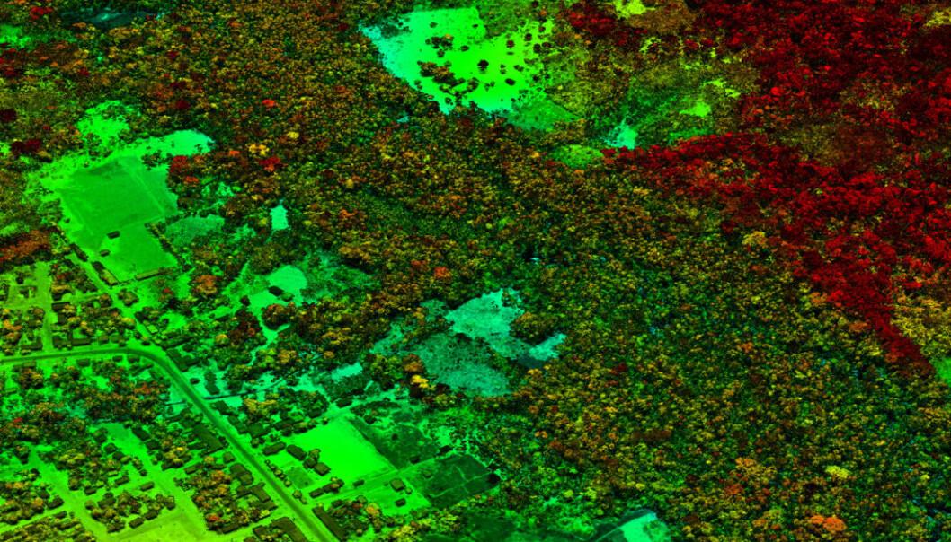 Dette LiDAR-bildet fra peruviansk Amazonia viser et område der det bygges vei og bygges ut inntil skogsområder. Den gamle skogen er rødfarget, mens nyvokst skog er grønn.  (Foto: Carnegie Airborne Observatory, Carnegie Institution for Science)