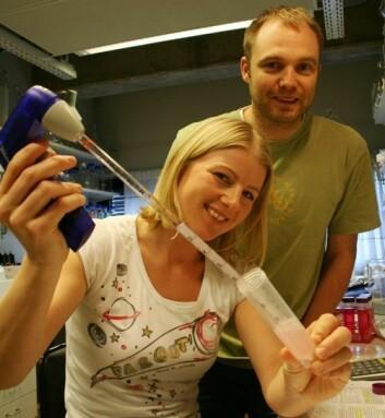 Tuva Hereng og Ken Rosendahl henter ut sædceller og tester effekten av ulike stoffer på svømmeevnen deres. (Foto: Elin Fugelsnes)
