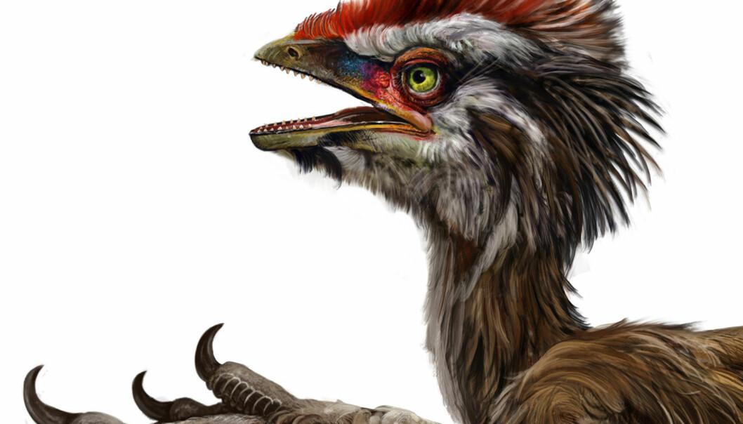 Anchiornis huxleyi. Foto: Zhao Chuang og Xing Lida