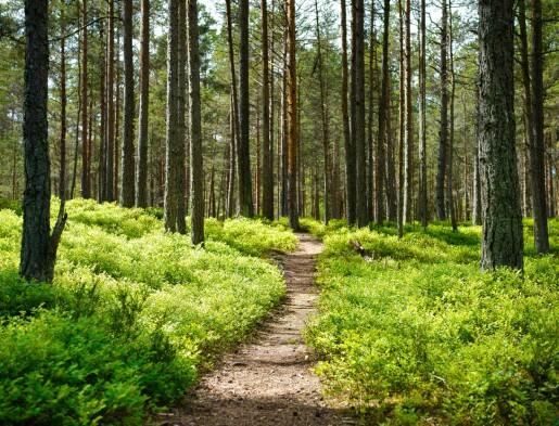 Livet under skogen