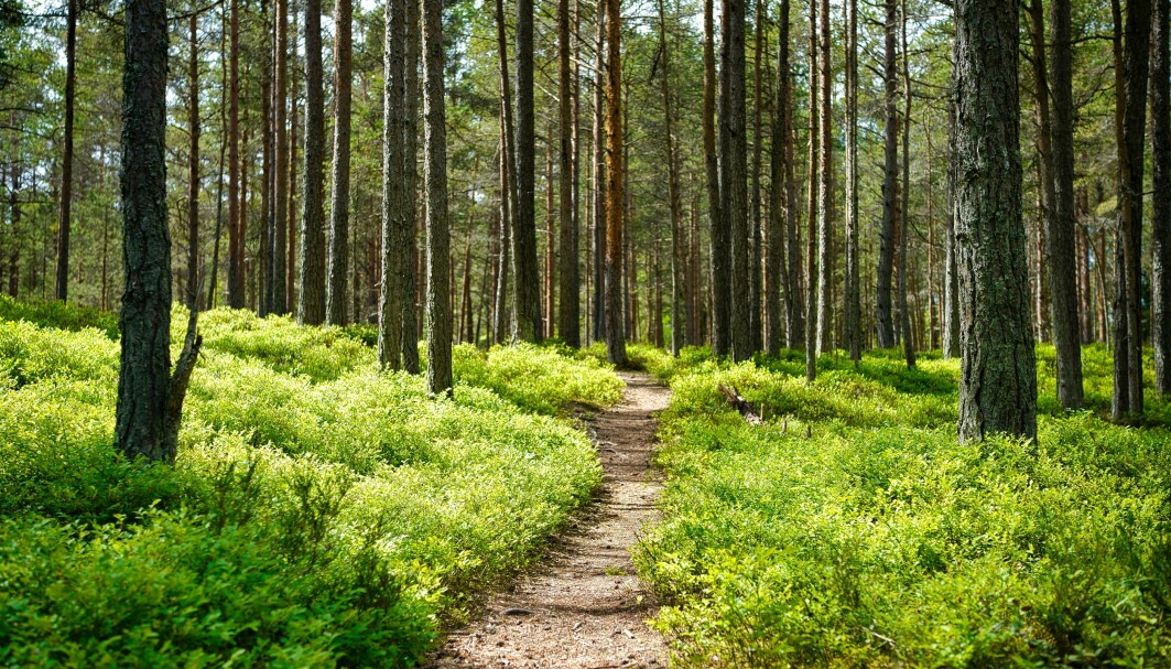 Under stien er det også et rikt liv. Her fra en skog i Harju i Estland.