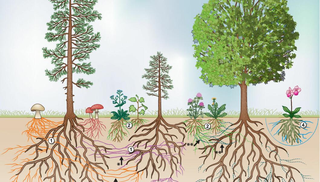 Planter og sopp sin utstrekning under bakken.