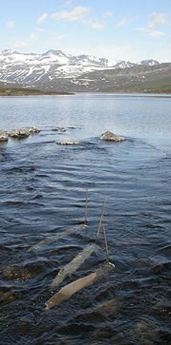 Nett som fangar virvellause dyr ved utløpet av Øvre Heimdalsvatn. Foto: John E. Brittain, NHM