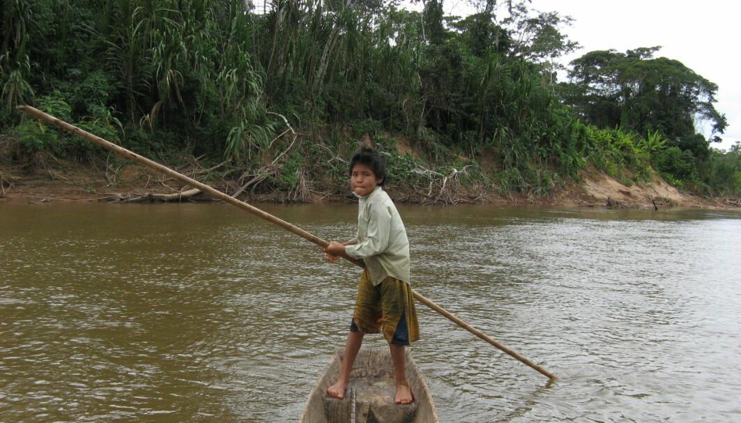 Forskere mener de kan se at urfolksgruppen Tsimane i Bolivia holder hjernen ung lenge.