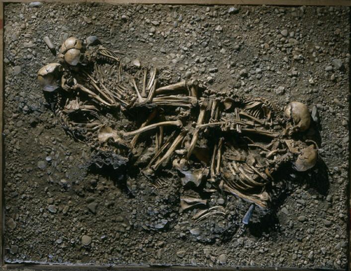 Graven fra yngre steinalder med mannen, kvinnen og de to sønnene på 8-9 år og 4-5 år, som viste seg å være en familie. Foto: Landesamt für Denkmalpflege und Archäologie Sachsen-Anhalt/Juraj Lipták.
