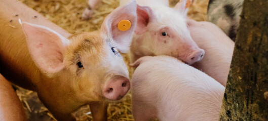 Seks av ti er bekymret for dyrevelferden