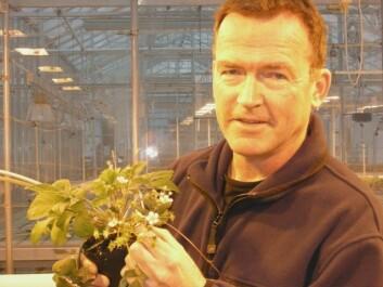 Forsker Jahn Davik ved Bioforsk Midt-Norge i Stjørdal. (Foto: Ole Kristian Røset)