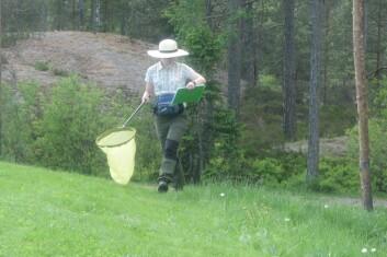 Feltregistrering av humler og dagsommerfugler. (Foto: Jan Ove Gjershaug, NINA)