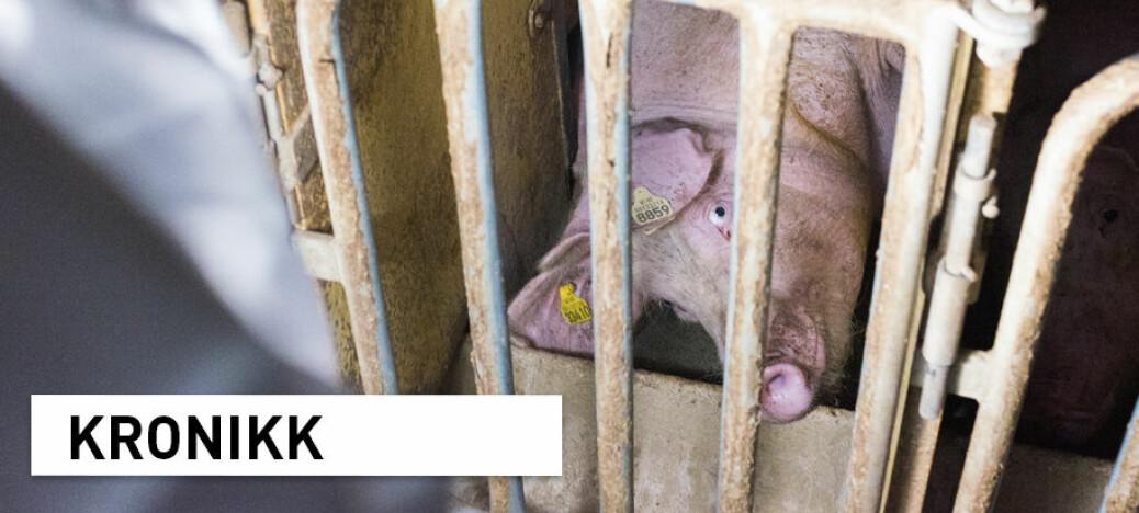 Dyrevernskandaler: Tilliten til dyrevernere har sunket