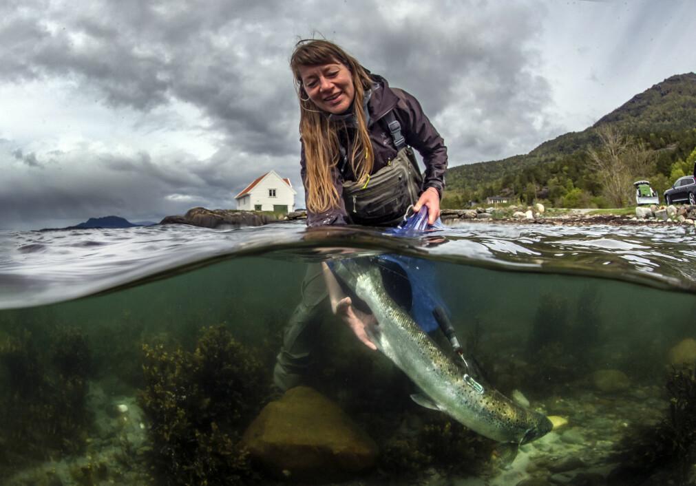 Eva Thorstad setter ut en laks med «pop up-merke». Hun er ansatt ved NINA og er også professor II ved UiT.