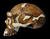 Human fossil dating metoder