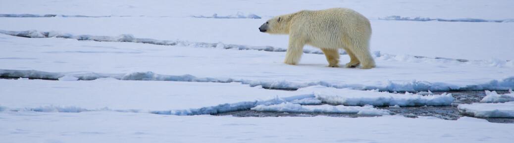 Havforskere vil utvide iskantsonen