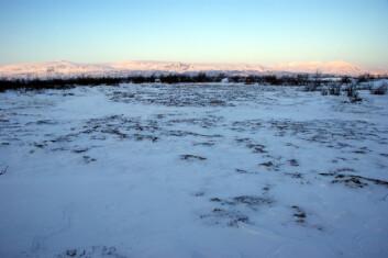 Kreklingeheier ved Abisko Suolo i Nord-Sverige nesten uten snø i mars 2009. Foto: Jarle W. Bjerke, NINA.