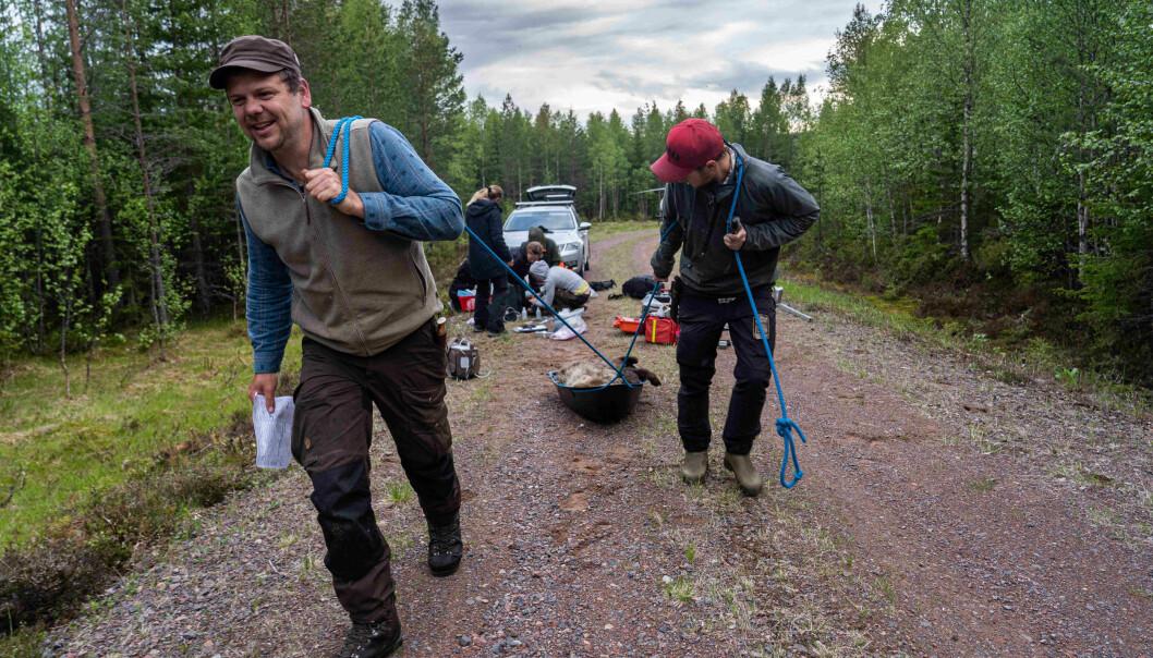 Boris Fuchs er en av forskerne som har undersøkt blynivåene i bjørn.