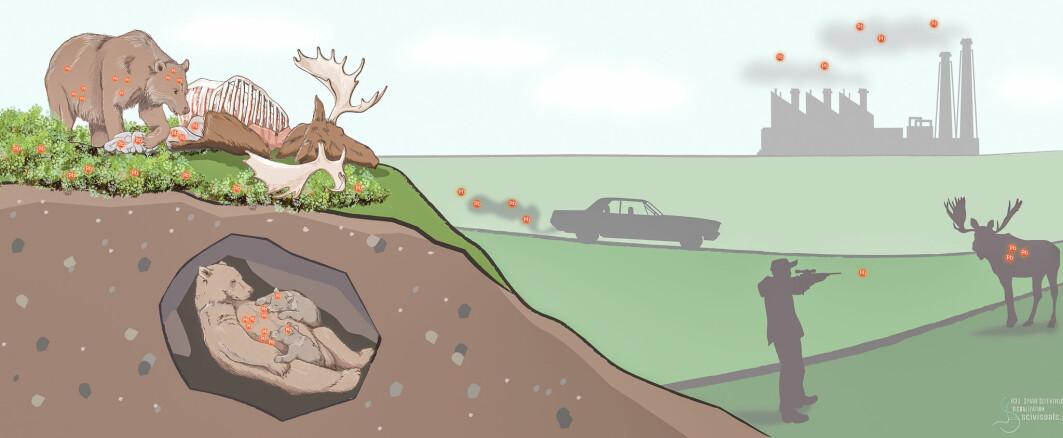 Det er flere kilder til de høye blynivåene forskerne har funnet i bjørn de siste ti årene.