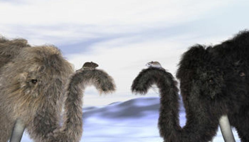 """""""Pelsfargen til mammutene baserer seg på funn av mammuthår. Rekonstruksjon ved Knut Finstermeier. Foto: Science."""""""