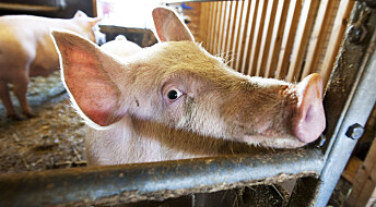 Hvorfor er befolkningens støtte til dyrevernere halvert?