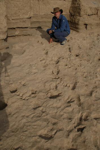 Professor Matthew Bennett ved Bournemouth University foran et av de fossile fotsporene ved Iluret i det nordlige Kenya.(Foto: Professor Matthew Bennett, Bournemouth University)