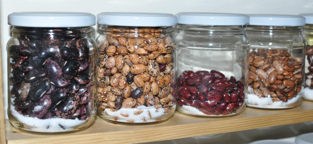 Et lite utvalg av bønnesorter hos Green Lane NGO, som sørger for at frø fra sjeldne sorter kommer ut blant folk.