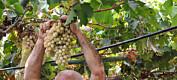 Et av verdens viktigste steder for ville, gamle plantesorter er truet