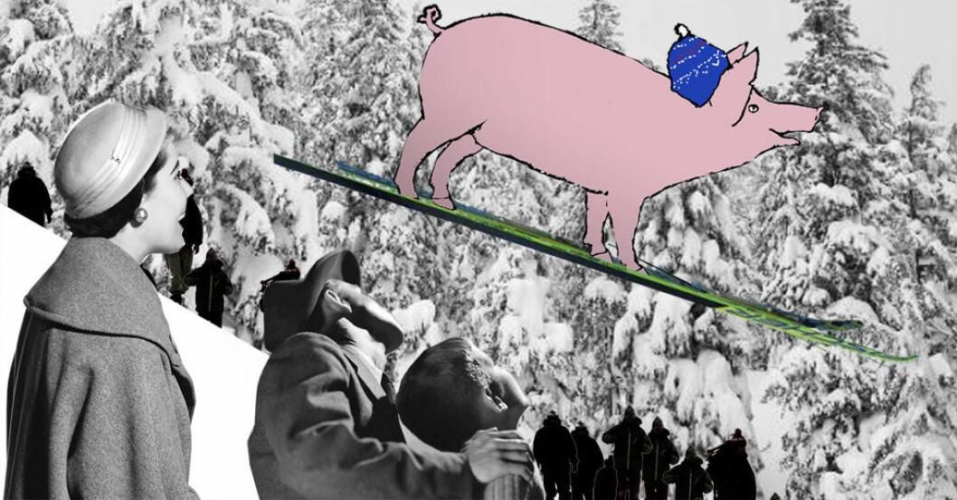 I gamle dagar batt dei fast ei ski til slaktegrisen så han ikkje skullle stikke av. Nordmøringar, romsdalingar og sørtrønderar var griseplagarar! (Illustrasjon: Annica Thomsson)