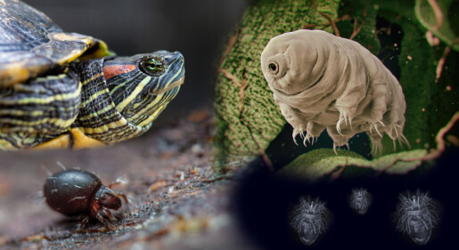 Naturens utrolige overlevere: Disse dyrene nekter å dø